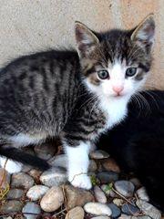 1 Katzenbaby Kitten Kater