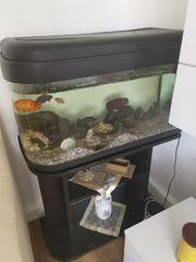80 cm Aquarium mit ca
