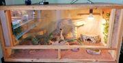 Holzterrarium mit Besatzung