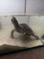 Wasserschildkröten Aquarium Pumpe