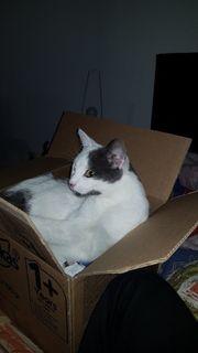 Katze vermisset Bitte Teilen wir