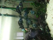 Panorama Aquarium 450 l