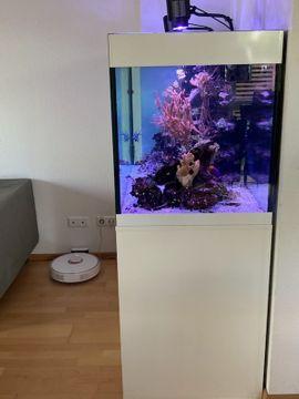 Meeresaquarium komplett: Kleinanzeigen aus Flein - Rubrik Fische, Aquaristik
