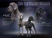 Deutsche Doggen Welpen suchen ein