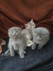 süße Kitten suchen neues zu