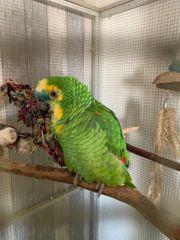 Papagei mit Käfig