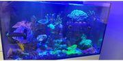 Meerwassergetiere Korallen Fische Krebse Schnecken