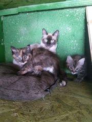 Bluebell und ihre Babys