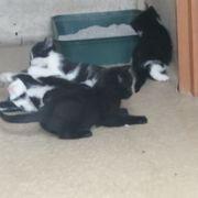 3 Junge Katzen zu verschenken