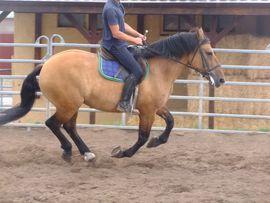 Pferde - Ständig Fahr-u Freizeitpferde