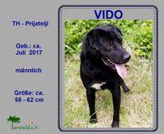 VIDO 2 - Ein sehr aktiver