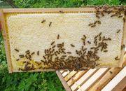 Honig direkt vom Imker am