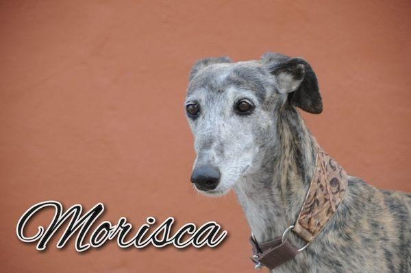 Morisca sucht ein spannendes Ruheplätzchen