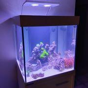 Eheim Meerwasseraquarium komplett zu verkaufen