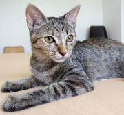 ITACA - Unkompliziertes Katzenmädchen sucht ihre