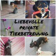 Liebevolle private Tierbetreuung Hundesitting Katzensitting
