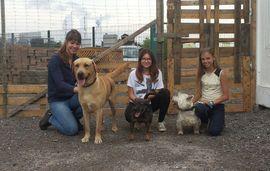 Stellenangebote - Praktikum für kreative Studenten- Tierpension