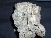 Fossilie Versteinerung Mineralie Sammlung