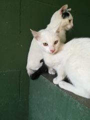 Ciruela und Coco suchen ihr