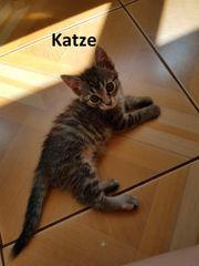 Katze Wilma sucht liebevolles Zuhause