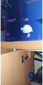 Suche Meerwasserfische