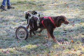 Hunde - Mimmi geb 2013