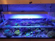 Aquarium Auflösung Meerwasser Korallen Fische