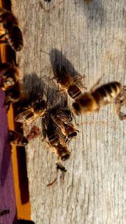 Fange Bienenschwärme ein
