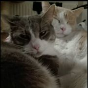 zwei liebe Geschwister - Katzen Kater
