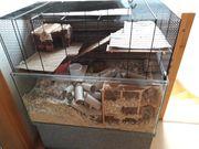 Mäusekäfig Terrarium