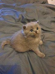 kitten edelmix einzigartig
