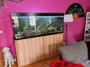 Aquarium 1000l komplett