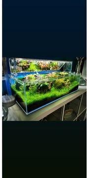 Ada 60 F Aquascape