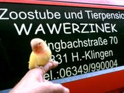 Vogel- und Kleintierbörse am 20
