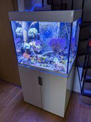 Meerwasseraquarium mit Zubehör