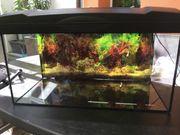 Aquarium 60x30x30 cm