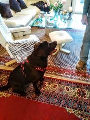 tierbetreuung für hunde und Katzen