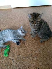 meine kleinen süßen kater