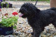 Pamacs aktives Hundemädchen ca 7