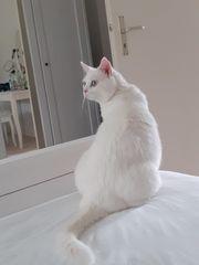 Liebevolle Katze