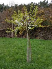 Grünland Weide Wiesen in Königswinter