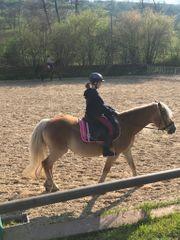Junge Reiterin sucht Pferd Reitbeteiligung
