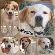 Wunderschöner Pointer Mix Rüde Madito