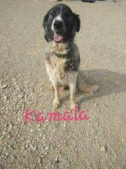 Kamala sucht ihr für immer