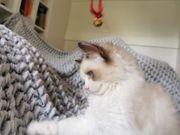 Unsere Kätzchen suchen eine neue