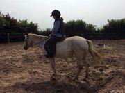 Pony POA Stute Freizeit 1