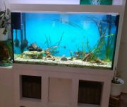 Großes Aquarium - ein echter Hingucker -