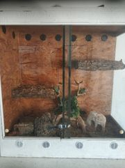 Kornnatter mit ohne Terrarium