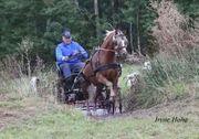Suche Fahrbeteiligung für Pony mit