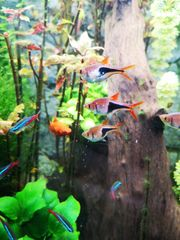 Diverse Fische abzugeben